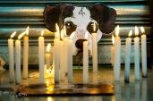Protesto no supermercado Carrefour, na cidade de Osasco, neste sábado (08), onde uma cachorra foi morta por um segurança da loja. © BW PRESS COPYING OR REPRODUCTION PROHIBITED. AVISO: Imagens protegidas pela lei do direito autoral 9.610/98. É proibido o uso ou cópia sem permissão do autor. Sujeito às penalidades legais