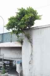 Vista do Viaduto Carlos Ferraci, no bairro do Tatuapé, zona leste de São Paulo (SP), neste terça feira (05). O viaduto, que passa sobre a Radial Leste, Linha Vermelha do Metrô e linhas da CPTM, está na lista de urgência da Prefeitura e será vistoriado para detectar possíveis riscos de colapso. © BW PRESS COPYING OR REPRODUCTION PROHIBITED. AVISO: Imagens protegidas pela lei do direito autoral 9.610/98. É proibido o uso ou cópia sem permissão do autor. Sujeito às penalidades legais. #agenciaoglobo #jornaldobrasil #afp #folhapress #agenciaestado #uol #g1 #terra #yahoo #valor #dci #reuters #getty #zuma #epa #dpa #viaduto #azevedo #carlosferraci #colapso #acidente #prefeitura #perigo #vistoria