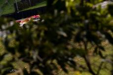 Ricardo Zonta, da equipe Shell V Power, durante os treinos e qualifica‹o para a 12» etapa da temporada 2019 da Stock Car Brasil, no Aut—dromo Internacional JosŽ Carlos Pace - Interlagos - na zona sul de S‹o Paulo, neste s‡bado (14). Paulo Lopes ©BWPressFoto COPYING OR REPRODUCTION PROHIBITED. #corrida #stock #pista #piloto #t4f #vicar #pneu #velocidade #folhapress #agenciaestado #agenciaoglobo #globo #istoŽ #epa #reuters #zumapress #nur #dpa #afp #ap #volante #bandeirada #largada #curva